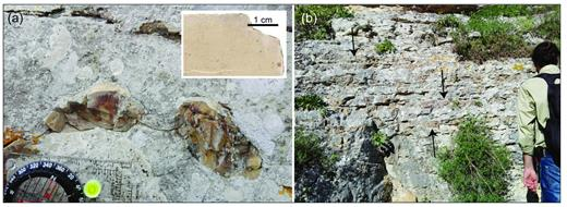 (a) Nodules of chert included in marly mudstone of unit d; the brownish color of the marly mudstone is shown in the scanning of slab of rock sample in the upper right. (b) Gently undulated cherty layers, some of which pointed by arrows, in unit d; a 1:1 ratio among chert and marly mudstone can be appreciated.