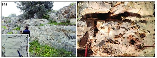 (a) Well-stratified mudstone and very fine-grained packstone/grainstone in the lower part of the unit g; the ligth brown color of the mudstone, and the stylolites characterizing some stratal surfaces can be appreciated in the lower left picture magnification. (b) Rudists floatstone in the upper part the unit g.