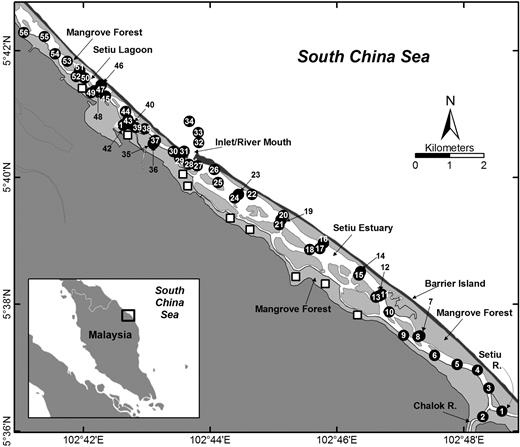 GPS location of samples in the Setiu estuary-lagoon, Terengganu, peninsular Malaysia. Mangrove forests indicated by light gray shading and mangrove-forest fish pens by open squares. Floating fish cages occur at or near the sites of estuarine sample 10 and lagoonal samples 40, 43, and 47.