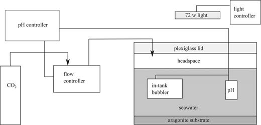 Schematic of experimental apparatus.
