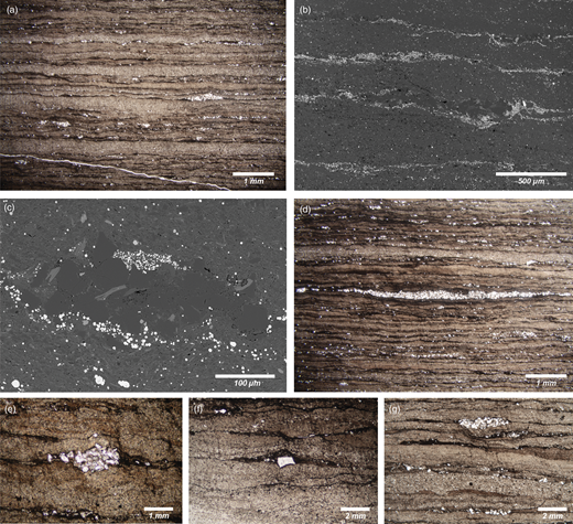 Typical textural and compositional features of the Soom Shale sediment. (a)–(g) are petrographic images and (b) and (c) are scanning electron microscope backscattered electron images. (a) Typical intercalated homogeneous facies (four lighter layers) and dark, organic-rich laminated facies. The white patches represent clusters of quartz grains (see also (c), (d), (e) and (g)), which almost exclusively occur within the dark, organic-rich layers of the laminated facies. (b) Intercalated homogeneous and laminated facies. Here, pyrite framboids and microcrystals (bright grains) are confined to the laminated facies, probably precipitating within the organic-rich layers. In the centre of the image a cluster of large quartz grains (dark grey) occurs, bounded below by a pyrite-rich layer. (c) A cluster of grains in the laminated facies, comprising dominantly quartz (dark grey) with a few large clay grains (elongate, light grey grains); pyrite (bright grains) occurs around the cluster and denotes the likely position of organic matter (algae?). (d) An elongate cluster of quartz grains in the laminated facies. (e) Small, tightly packed quartz cluster. (f) A large and isolated quartz grain within a thin organic-rich layer. (g) Homogeneous facies (bottom) and laminated facies (top); within the latter lighter, brown lenses and layers occur; these are composed of mud.