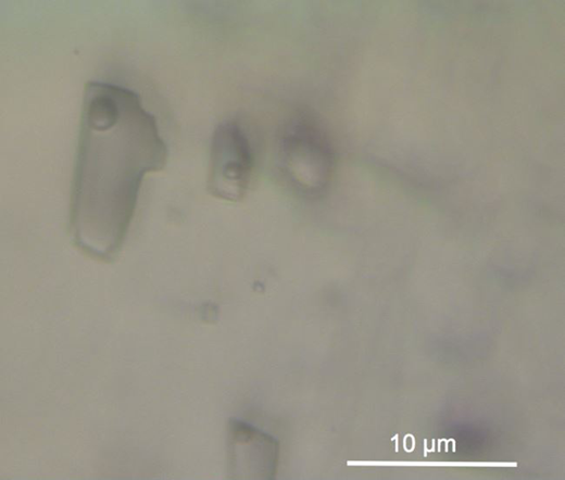 Photomicrograph of two-phase fluid inclusions in calcite, Bayston Hill. Inclusions fluoresce bluish white under UV light.