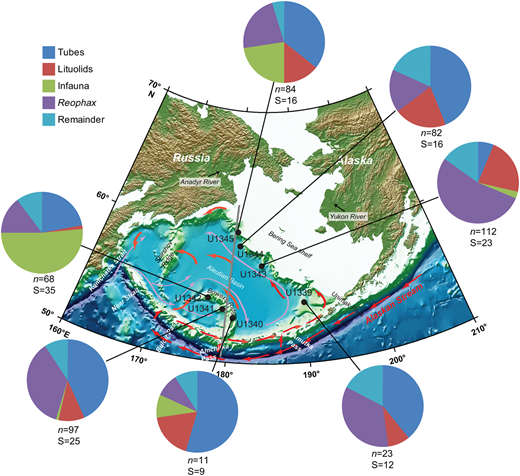 Bathymetric map of the Bering Sea (Expedition 323 Scientists 2010), showing IODP Expedition 323 sites reported in this study, and the number of specimens (n) and number of taxa (S) in major agglutinated foraminiferal assemblage components from core-top samples. Also indicated are the major surface (red arrows) and deep (purple arrows) ocean currents. Grey line corresponds to the section shown in Figure 3.