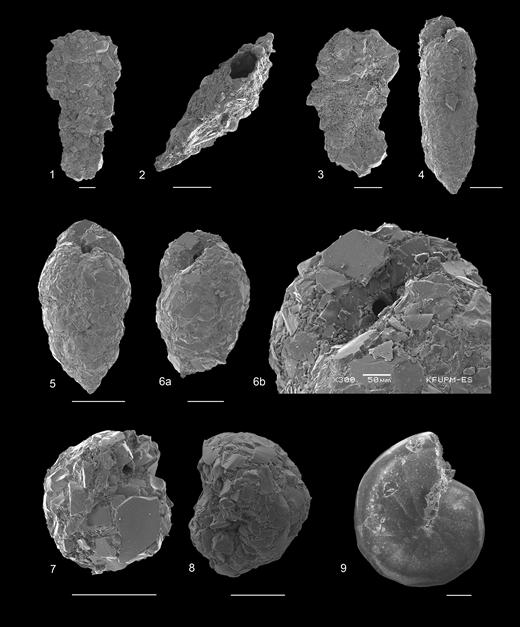 (1–3) Glaphyrammina cf. americana (Cushman, 1910), Hole U1344B. (4–6b) Eggerelloides sp. 1, Hole U1345C. (7, 8) Recurvoides sp.: 7, Hole U1343E; 8, Hole U1345B. (9) Cyclammina compressaCushman, 1917, Hole U1342A. Scale bar 200µm unless labelled otherwise.