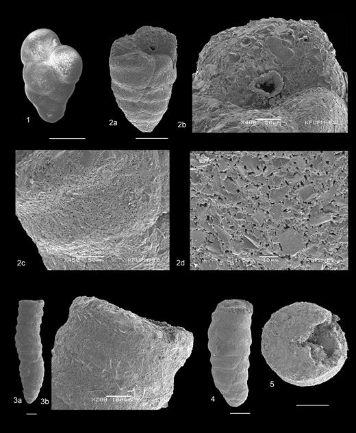 (1) Karreriella sp. 1, Hole U1341B. (2a–5) Martinottiella sp. 3, Hole U1342A. Scale bar 200µm unless labelled otherwise.