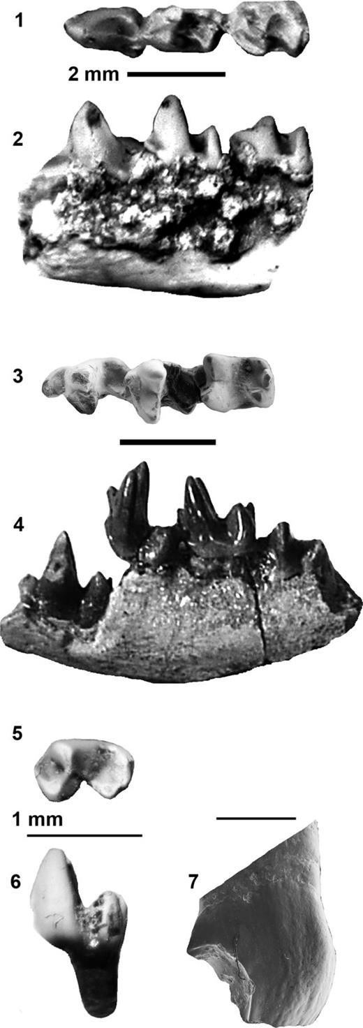 Images 3 and 7 are SEM photographs; others are standard photographs. (1–2) FOBU 6338, Copedelphys innominatum, left dentary
