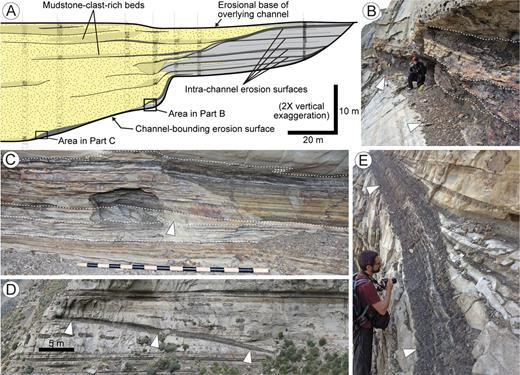 Evidence for sediment bypass from the Tres Pasos Formation outcrop belt, Magallanes Basin, Chile.A) Slope-channel cross section highlighting the shift from sandstone-dominated to siltstone-dominated strata from channel axis (left) to margin (right), as well as numerous intrachannel erosion surfaces (modified from Hubbard et al. 2014). The complicated intrachannel strata indicate a protracted history of erosion, sediment bypass, and deposition within the conduit, before ultimately being filled. B) An erosional channel base (indicated by arrows) overlain by thinly interbedded siltstone and sandstone. The recessive, composite unit that drapes the channel base is characterized by numerous internal erosion surfaces (dashed lines), which are thought to have been incised when coarse-grained sediment was bypassed basinward. The location of the photograph is indicated by a rectangle in Part A. C) Composite package of laminated siltstone and sandstone draping a channel base, with cross-stratification delineated by the white arrow. The location of the photo is indicated by a rectangle in Part A. D) Siltstone bedset overlying a channel base (delineated by triangles). E) A close-up perspective of the bedset highlighted in Part D, showing that beds parallel the underlying, inclined channel-base erosion surface. Thick sandstone beds pinch out to the left (towards the channel margin), yet the turbidite caps (Bouma Td–e) persist and contribute to the overall thickness of the drape unit.