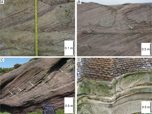 Cross-stratification with bottomsets. A) The Carboniferous Sandy Craig Formation at Pittenweem, Fife, UK. Back-flow ripples, examples of which are identified by black arrows, are present in the bottomsets. B, C) The Carboniferous Roaches Grit at the Roaches, Staffordshire, UK. Black arrows in Part B denote bottomset deposits. The white arrows in Parts B and C denote where climbing back-flow bedforms interfinger with overlying foresets. D) The Triassic Chester Formation (previously known as the Nottingham Castle Sandstone Formation) at Park Tunnel, Nottingham, UK. The bottomset consists of a gravel layer, denoted by black arrows.