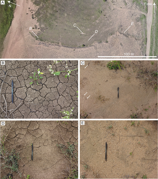 Deposits downstream of a 2-m-high, bank-attached bar formed along the southern margin of the Burdekin River channel at the Burdekin River field site. A) Overview photogrammetric reconstruction (using Agisoft Photoscan) of the bar trough constructed from photographs collected using a Phantom 2 unmanned aerial vehicle. Bar-trough deposits contained: B) relatively thick (ca. 40 mm) mud with desiccation cracks; C) consolidated sand and mud with burrow holes (denoted with white arrows); D) Relatively thin mud (ca. 10 mm) with localized desiccation cracks; E) consolidated sand and mud with cracks. The locations of Parts B to E are noted in Part A. The pen is 0.14 m long.