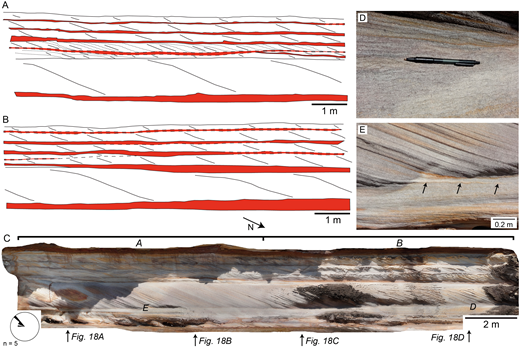 A, B) Schematics of sedimentary structures preserved within the Hawkesbury Sandstone exposure examined at Site HS1. Bottomsets are highlighted in red. Dashed lines denote likely bottomset boundaries where contact with the foresets is poorly defined. Dotted lines denote reactivation surfaces. C) Photogrammetric model of exposure face denoting the locations of schematics A and B. D) Thin mud drapes (< 1 mm) distributed throughout upper parts of the bottomset (pen is 0.14 m long). E) Infrequent cross-stratum that extended into the bottomset (denoted with black arrows). The locations of Parts D and E is noted in Part C. Rose diagram denotes foreset dip direction in five cross-stratified sets measured over the exposure.