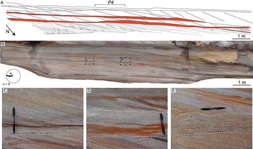 A) Schematic of sedimentary structures preserved within the Hawkesbury Sandstone exposure examined at Cronulla (Site HS2). Bottomsets are highlighted in red. Dotted lines denote possible reactivation surfaces. B) Photogrammetric model of a section of the exposure face. C) A 30-mm-thick bottomset featuring a relatively thick (< 3 mm) mud drape along the bottomset–foreset boundary. D) The same bottomset as in Part C but here 150 mm thick. E) A 150-mm-thick bottomset containing thin mud drapes distributed throughout. The locations of Parts C and D are noted in Part B. White dashed lines in Parts C to E denote bottomset bounding surfaces, the upper bottomset surface in Part C is denoted by the mud drape. Pen is 0.14 m long. Rose diagram denotes foreset dip direction in eight cross-stratified sets measured over the exposure.