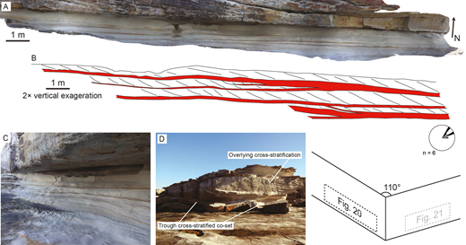 A) Photogrammetric model of the Hawkesbury Sandstone exposure examined at Cape Banks (Site HS3), along the migration direction of the formative bedforms. B) Schematic of the internal structure, with 2× vertical exaggeration. Bottomsets are highlighted in red. C) Photograph of the lower co-set of cross-stratification. D) Overview photograph of the site. Rose diagram denotes foreset dip direction in six cross-stratified sets measured over the exposure.