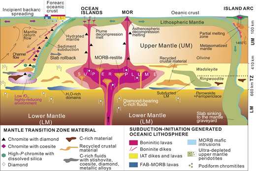 Interpretive model for the formation of microdiamonds and associated ultrahigh-pressure minerals in the oceanic mantle and for their incorporation into ophiolite-hosted chromites within the mantle transition zone (TZ). FAB—forearc basalts; IAT—island arc tholeiite; LM—lower mantle; MORB—mid-oceanic ridge basalt; MOR—mid-ocean ridge; UM—upper mantle; P—pressure. See text for discussion. Data are from Liou et al. (2014) and Yang et al. (2014, 2015b).