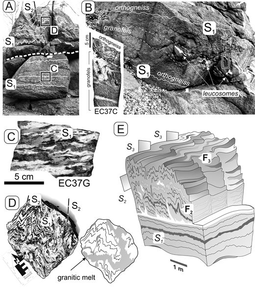 (A, B) Outcrop photographs illustrating the folding style in domain A. The detachment plane between the folded anatectic domain and underlying flat-lying S1 fabrics is indicated by a thick dashed line in A. Outcrop shown in B is located just 10 m below the outcrop in A and reveals a single, 20-cm-thick granofels layer in banded orthogneisses with flat-lying S1 fabrics. Note that the S1 fabrics and the contact between the orthogneisses and the granofels are concordant and both are only slightly crenulated. Location of rock section capturing the contact between the orthogneiss and the granofels (inset) is shown with a black rectangle in B. The rock section in B shows a leucosome patch with biotite-rich restite in the granofels at the contact with the orthogneiss. Another leucosome forms a 1-cm-thick and S1 parallel layer at the bottom of this rock section. A 7-cm-wide geological compass at the center of A and bottom part of B is shown for scale. (C) Section of rock sample collected below the detachment plane shows only slightly crenulated typical S1 fabrics, with alternating bands of feldspars surrounding lenses of quartz and streaks of mica aggregates. (D) Rock section in the folded domain reveals crenulated S1 fabrics interspersed by granitic melt along both the S1 fabrics and fold axial planes S2 (see inset for schematic sketch). (E) A schematic block diagram summarizing the outcrop-scale structure, where a granofels layer is shown in dark gray, orthogneiss in light gray and migmatites or granitic melt in white.