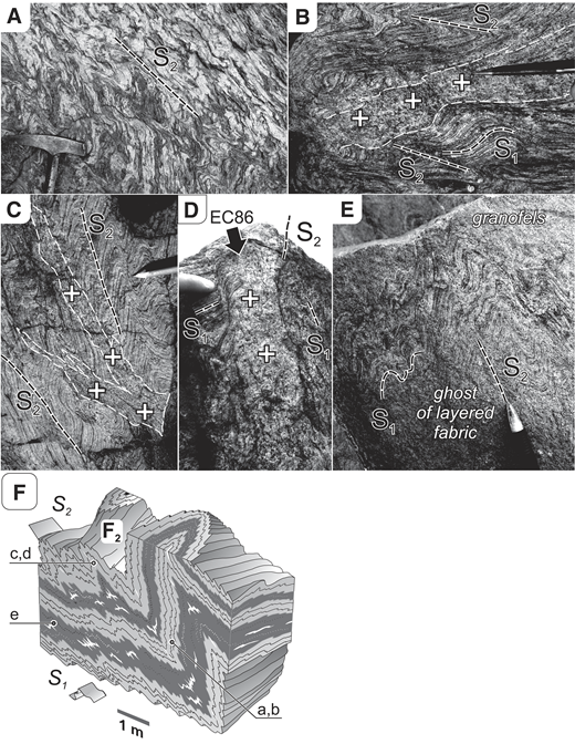 Deformation and melt accumulation structures displayed in domain B, represented by the Kadaň outcrop (Fig. 5). (A) Axial planar (crenulation) cleavage (S2) in banded orthogneiss. (B) A migmatite layer (neosome) in banded orthogneiss parallel with the S1 deformation layering folded into D2 Z-folds. (C) Neosome patches in planes parallel to the axial planar cleavage (S2) developed in folded mylonites. (D) Migmatite in a hinge zone of a D2 fold; EC86 corresponds to sample number. (E) A homogeneous gray granofels with a partly preserved domain (ghost) of the original layered orthogneiss or mylonite. (F) A block diagram schematically showing locations of individual photographs in the folded layered sequence, where granofelses are shown in dark gray, orthogneisses in light gray and neosomes/leucosomes in white color.