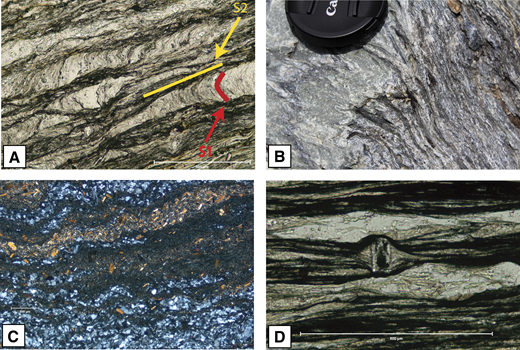 (A) S1 and S2 in the South Fork Mountain Schist (SFMS). Both fabrics are defined by differentiated quartz and mica bands. S1 is preserved as crenulation arcs at a high angle to S2, the dominant foliation (N39°51.395, W122°42.703). (B) S2 (dominant foliation in pelitic schist to right) is axial planar to D2 (folds in the green chert layer to left) (N39°51.492, W122°42.811). (C) Abundant lawsonite tablets in pelitic schist of the SFMS lie parallel to S2 (N39°51.058, W122°41.206). (D) S2 foliation in SFMS wraps around a lawsonite tablet, indicating that S2 formed after subduction to blueschist facies depths (N39°52.169, W122°44.140).