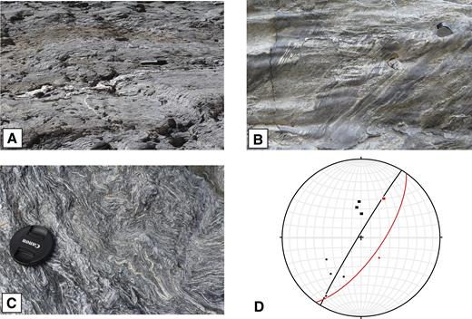 (A) 10-cm-scale W-vergent kink band in South Fork Mountain Schist (SFMS) intersects 2-cm-scale E-vergent kink band. Timing relationships are difficult to establish, and it is likely that these kink bands represent conjugate sets. Looking NW (N39°52.322, W122°44.847). (B) D2 crenulations in SFMS refolded by D3 crenulations (N39°52.267, W122°44.941). Viewed looking S. (C) Intense differentiated foliation (S2) in SFMS is tightly folded by D3 folds and crenulations with axial surfaces dipping to the right; these are refolded by more open D4 folds with axial surface dipping to the left. View looking S (N39°51.216, W122°42.271). (D) Equal-area lower hemisphere plot showing S2 planes from two adjacent outcrops in the steep zone of a major D3 fold in SFMS. Plane shown in black is vertical; plane shown in red is overturned. Closed circles—D3 fold hinges from the two limbs; squares—hinges of later kink folds.