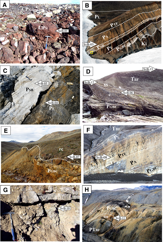 Field photographs of the sample locations and their stratigraphic relations (CPN—Carboniferous-Permian Nansen Formation; CPv—Carboniferous-Permian volcanics; PGBC—Permian Great Bear Cape Formation; PE—Permian Esayoo Formation; PSB—Permian Sabine Bay Formation; PA—Permian Assistance Formation; PTF—Permian Trold Fiord Formation; PL—Permian Lindström Formation; PTBF—Permian-Triassic Blind Fiord Formation; TBF—Triassic Blind Fiord Formation). Arrows indicate the location and sample number (Table 1). (A) Red sandstones interfingering with the Carboniferous–Permian volcanics at the River Section locality, northern Axel Heiberg Island. (B) Borup Fiord Pass section, the yellow square represents the area shown in detail in C. Note how the unconformity at the base of the Sabine Bay Formation cuts deeper stratigraphically toward the northeast (right). Ki—Cretaceous intrusion. (C) Detail of the unconformable contact between the Esayoo Formation and the Sabine Bay Formation on top. (D) The Permian-Triassic Blind Fiord Formation overlies folded strata of the Great Bear Cape Formation through an unconformable contact at the Folds Creek locality. ss—red weathering, bivalve-rich sandstone; c—boulder-sized chert conglomerate. (E) Detail of the red Roadian (lower Middle Permian) conglomerates at the Bukken River section in northern Axel Heiberg Island. rc—Red weathering conglomerate. (F) Bukken River section, northern Axel Heiberg Island. (G) Detail of the conglomerates above the Great Bear Cape Formation at the Conglomerate Section locality on northern Axel Heiberg Island. (H) Griesbach Creek section, where the Permian–Triassic Blind Fiord lies unconformably on an unnamed Permian unit (un—Maroon conglomerates and sandstones).