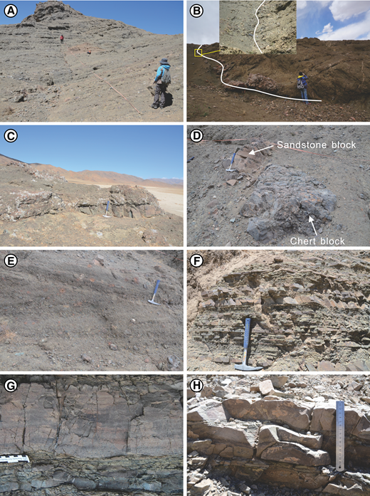 Field photographs of the Luogangcuo Formation. (A) Panorama of Section A. (B) Fault contact between the Xiukang Mélange (left) and the Luogangcuo Formation (right); detail shown in the inset photo. (C) Sandstone lens (Sm) intercalated with matrix-supported conglomerates (Gmm). (D) Slumped blocks of sandstone and chert. (E) Oblique lamination in pebble conglomerates (Gcp). (F) Lithofacies Sh and Fl representing turbiditic layers. (G) Turbiditic sandstone with incomplete Bouma sequence. (H) Thin-bedded sandstones with erosional base.