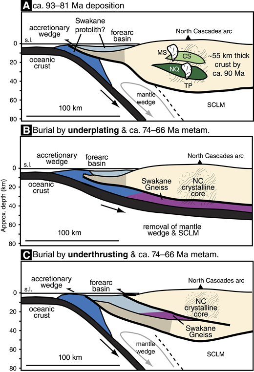 Schematic cross sections depicting the tectonic setting of the Swakane Gneiss during (A) ca. 93–81 Ma deposition and subsequent burial by (B) underplating or (C) underthrusting. The vertical and horizontal scales are equal. CS—Chiwaukum Schist; MS—Mount Stuart batholith; NC—North Cascades; NQ—Napeequa Schist; SCLM—subcontinental lithospheric mantle; s.l.—sea level; TP—Tenpeak Pluton.