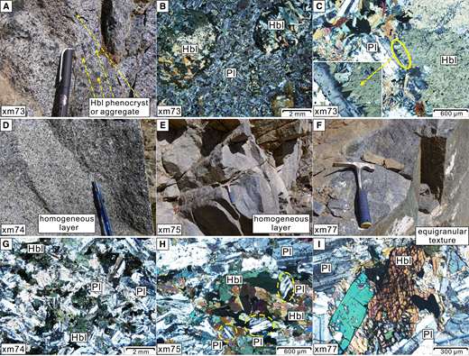 Representative field photos (A, D, E, and F) and photomicrographs (B, C, G, H, and I). (A) Hornblende phenocrysts and aggregates. (B) Small plagioclase laths occupy the place between the hornblende aggregates. (C) Hornblende phenocryst is crosscut by the plagioclase. (D–F) Equigranular textures of the hornblende and plagioclase. (G) Equigranular texture. However, the hornblende crystals show comb-like cuspate tails, implying intense crosscutting by the later-crystallized plagioclase minerals. (H) Small plagioclase crystals occur as the interstitial phase. (I) Subhedral hornblende and plagioclase showing equigranular texture. Mineral abbreviations: Hbl—hornblende; Pl—plagioclase.