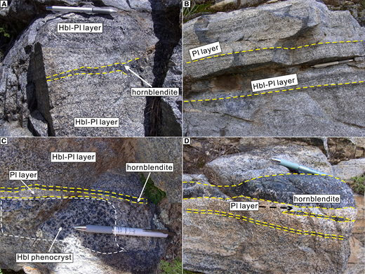 Field photos showing the cumulate structure of the appinite. (A) Hornblendite layer consisting of hornblendes as the dominant mineral. (B) Slight compositional layering due to gravitational sorting. (C) Obvious compositional layering, with hornblende aggregates or phenocrysts as the dominant minerals in the lower section, plagioclase in the middle section (plagioclasite?), and hornblende in the upper section (hornblendite). (D) Multiple hornblendite layers, probably revealing multistage magmatic pulses. Mineral abbreviations: Hbl—hornblende; Pl—plagioclase.