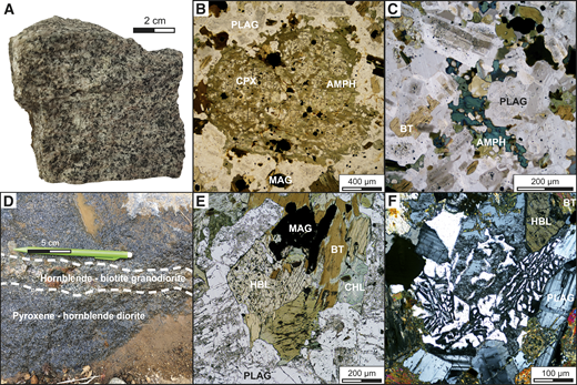Representative field photos and photomicrographs of the Kassiteres and Leptokaria samples. PLAG—plagioclase; MAG—magnetite; AMPH—amphibole; CPX—clinopyroxene; BT—biotite; CHL—chlorite; HBL—hornblende. (A) A granitic sample from the Leptokaria suite. (B) Photomicrograph of the Leptokaria cumulate where a relict clinopyroxene phenocryst has been almost completely replaced by amphibole. (C) Photomicrograph of the interlocking plagioclase phenocrysts with clear rim growth surrounded by interstitial poikilitic amphibole. (D) Magma mixing of clinopyroxene-hornblende and hornblende-biotite–rich end members of the Kassiteres intrusion. (E) A photomicrograph of the Kassiteres intrusion with primary hornblende + biotite + magnetite + plagioclase and minor chloritic alteration. (F) A photomicrograph of granophyric quartz-feldspar intergrowths from Kassiteres, also observed in the Leptokaria suite.