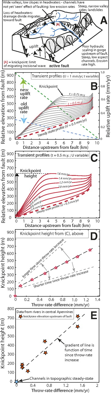 "(A) Cartoon showing a transient river response to a slip rate change on an active fault. (B) Modeled long profile evolution for a river crossing a fault (located at 0 km) that undergoes an increase in uplift rate (from Whittaker et al., 2008). Initial profile (red dashes) is in steady-state with the ""old"" throw rate (0.3 mm/yr at fault—blue dashes). Throw rate is instantly increased to 1 mm/yr at fault (green dashes). Grey lines show transient profiles in 0.05 m.y. time-steps. Red line shows profile at t = 0.5 m.y., identical to ""1 mm/yr"" long profile in (C). The profile downstream of the knickpoint is re-equilibrated with respect to the new uplift field. (C) Long profiles evolved to 0.5 m.y. for a range of uplift rates, using identical starting conditions to (B). Arrow illustrates knickpoint height for a throw rate of 1.6 mm/yr. (D) Knickpoint height at 0.5 m.y. as function of the throw rates in (C). Arrows show how distribution of knickpoint heights would vary for shorter/longer model run times. (E) Field data for transient rivers in the Apennines show knickpoint height scales with the known throw-rate increase at 0.8 Ma (Whittaker et al., 2008)."