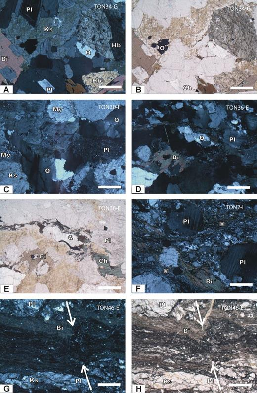 """(A–B) Undeformed granodiorite with inequigranular-seriate texture (sample TON34-G). K-feldspar was stained with Na cobaltinitrite and has a cloudy appearance in plane polarized light (ppl.). Biotite is slightly altered to chlorite. (C) Quartz commonly displays marked undulatory extinction in undeformed or mildly deformed rocks; plagioclase is slightly altered to fine-grained sericite. K-feldspar occasionally has gridiron twinning (sample TON30F). (D–E) Mildly deformed granodiorite: Some biotite crystals appear """"smeared,"""" defining a weak foliation, quartz has experienced polygonitization and grain-size reduction, and some plagioclase crystals display slightly bent twins due to internal deformation (sample TON36E, crossed nichols). Biotite located along the foliation is altered to chlorite and secondary spinel (E: ppl). (F) Igneous texture in intensely deformed bands within the protomylonites has been obliterated. A marked foliation, defined by secondary biotite and finely recrystallized quartz, wraps around rounded plagioclase crystals. Primary biotite has pressure tails formed by secondary, relatively coarse-grained biotite. The fine-grained aggregate was counted as matrix (M) during the modal analysis (sample TON2I, crossed nichols). (G–H) Sample TON46E is unique in the studied set as it displays a marked foliation defined by very fine-grained secondary biotite and recrystallized quartz. Porphyroclasts are elongated parallel to the foliation and show intense internal microfracturing and undulatory extinction. The foliation is cut by brittle microfaults (arrows). Key for abbreviations: Ks—K-feldspar, Pl—plagioclase, Q—quartz, Bi—biotite, Ch—chlorite, Hb—hornblende, Sp—sphene, My—myrmekite, M—matrix. The scale bars are 200 µm."""