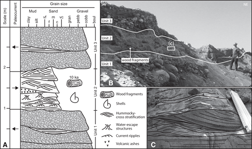 (A) Sedimentological log of the analyzed section. Abbreviations: vf—very fine, f—fine, m—medium, c—coarse, vc—very coarse. (B) Outcrop photo showing the lateral extent of the described section, the described units, and the location of one of the sampled wood fragments. (C) Close-up photo of unit 2 displaying, from bottom to top, parallel to undulated bedding, asymmetric ripples with shoreward current direction and as much as 30 cm wavelength, topped by tabular beds.