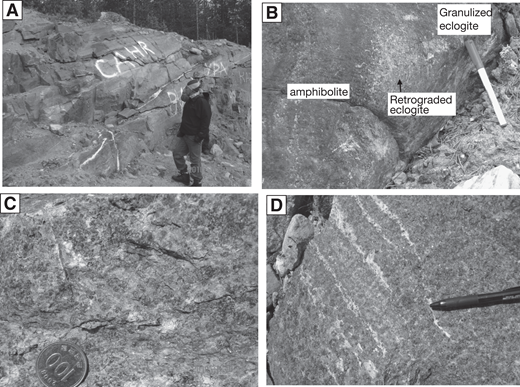 Outcrop photographs of the Salma eclogites from the Kola Peninsula, Russia. (A) Eclogite outcrop in which layered-type eclogite is interlayered with amphibolite and granulite. (B) Eclogite that has retrograded into granulite or amphibolite, with relict eclogite. (C) Rather fresh eclogite consisting of garnet and omphacite with minor amphibolite. (D) Thin leucosome in eclogite.