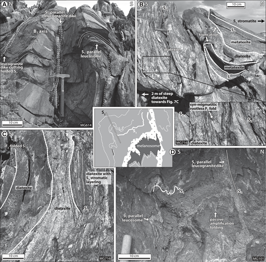Field photographs of migmatites (vertical surface of the outcrops, highly oblique to the F2 fold axes B2). (A) Fold-structured stromatite. Leucosomes are parallel to the folded S1, whereas some coarser grained leucogranite dikes cut across the folds subparallel to the S2 foliation (locality MG614; N45.30497, E98.03712). (B) Truncated S1 metatexite outcrop in the limb of an upward cuspate diatexite domain. The diatexite displays schlieren and rootless folds parallel to the S2 foliation (locality MG716; N45.23944, E98.05975). (C) Detail of the steep, F2-folded metatexite surrounding diatexite (2 m south from photograph in Fig. 7B). The coarse-grained leucocratic diatexite has a funnel tabular shape pointing upward, parallel with S2. The features in B and C are interpreted as mechanical collapse of the S1 framework associated with protracted injection of diatexite along S2 planes during the D2 deformation. (D) Folded metatexite. S1-parallel leucosomes merge with S2-parallel steep leucogranite dikes. The melanosome-leucosome interface is polyclinally and nonperiodically folded, indicating passive amplification. Subparallel fold axial planes with steep leucogranite dikes suggest folding and dike emplacement during D2 (MG101; N45.29473, E97.81899).