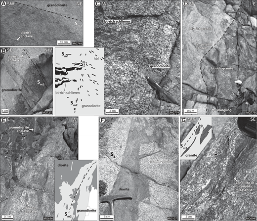 Structures in the core magmatites (vertical surfaces of outcrops). (A) Shallow-dipping magmatic foliation Sm1 marked by flattened diorite enclaves in granodiorite (MG749; N45.33361, E97.74816). (B) Steeply dipping magmatic foliation Sm2 in granodiorite (MG721; N45.29517, E97.96062). (C) Photograph and schematic drawing of granodiorite with two orthogonal magmatic foliations: subhorizontal magmatic foliation Sm1 is affected by steep S2-parallel magmatic foliation Sm2 (MG774; N45.33976, E97.75737) (bt—biotite; hbl—hornblende). (D) Steep S2-parallel magmatic contact between two granites of different mineralogy. Local mingling in a meter-wide area at the contact (MG779; N45.34482, E97.77486). (E) Photograph and schematic drawing of mingling and other features at the diorite-granodiorite contact. Orientation of magmatic minerals and enclaves are in agreement with emplacement of batches of distinct composition during D2 (MG636; N45.26516, E98.1442). (F) Fine-grained diorite dike in granite gneiss with amphibolite facies metamorphic foliation S2 (MG107; N45.26624, E98.10258). (G) Photograph and schematic sketch of S2-parallel xenoliths of migmatitic mica schist in granite. Locally, xenoliths (black arrow) enclose F2 fold hinges (MG694; N45.27353, E97.99515).