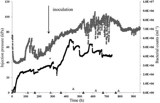 Injection pressure and bacterial counts for the control and biotic mudstone column experiments. The control pressure and bacterial counts are shown by a black line and black open triangles, respectively. The biotic pressure and bacterial counts are shown by a grey line and grey open triangles, respectively.