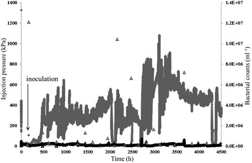 Injection pressure and bacterial count data for the control and biotic sandstone column experiments. The control pressure and bacterial counts are shown by a black line and black open triangles, respectively. The biotic pressure and bacterial counts are shown by a grey line and grey open triangles, respectively.