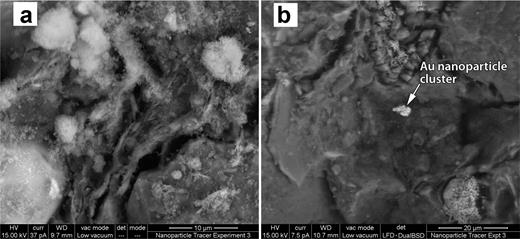 (a) A combined SE and BSE image showing finely dispersed and 'fluffy' aggregates of TiO2 nanoparticles (white) coating the fractured clay surface. Although authigenic anatase is present within the Boom Clay as a diagenetic alteration product of unstable ferromagnesian minerals, ilmenite or titanian magnetite, it can be differentiated from the TiO2 within the nano powder for the following reasons: the TiO2 within the nanoparticle plume is far too abundant, covering a large proportion of the fracture surface in comparison to the natural TiO2, which is only present in trace amounts; the trail of TiO2 nanoparticles clearly originates from the point of injection (Fig. 3), and is not uniformly distributed across the sample, or concentrated in heavy mineral bands, as would be expected for naturally occurring anatase; mapping clearly shows little or no detectable TiO2 in the Boom Clay in fractured areas outside the plume due to its low level of concentration; whereas gold nanoparticles are not as well dispersed across the fracture surface, there are sufficient gold particles present in association with the mapped TiO2 to be confident that it stems from the nanoparticle assemblage injected into the sample. (b) Mixed SE and BSE image showing an aggregate of gold nanoparticles embedded within the clay matrix from a site 17 mm from the injection face. Figure 3 shows the distribution of gold and TiO2 along the fracture plane which was exposed following immersion of the sample in liquid nitrogen and splitting of the core.