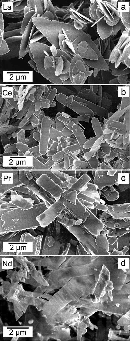 SEM images of pure REE-lanthanites, where REE corresponds to La (a), Ce (b), Pr (c) and Nd (d).