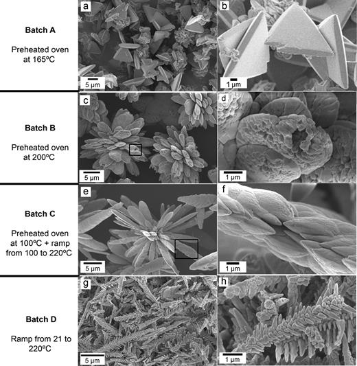 FEG-SEM images of NdCO3(OH) produced via the four different hydrothermal treatments. The habits are changing as a function of the experimental conditions. (a,b) Triangular pyramid shapes obtained from batch A; (c,d) cauliflower-type morphologies obtained from batch B; (e,f) spine-shaped aggregates developed with batch C; (g,h) fishbone (dendritic) morphologies obtained with a heating ramp from 21 to 220°C (Batch D).