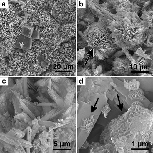 SEM images of the precipitates from Spring #1 (a,b) and Spring #2 (c,d). (a) The carbonate surface film from Fig. 1a, sample OM01: rhombohedral calcite in a network of aragonite needles. (b) Sample OM03, dypingite rosettes (black arrow) surrounded by acicular aragonite; (c) Sample OM08 from Fig. 1b, crystals of aragonite; (d) close-up of the same area showing a secondary phase (black arrows) growing from or nucleating on the aragonite crystals. These crystals are probably dypingite. Samples OM03 and OM08 were collected from the bottom of the springs.