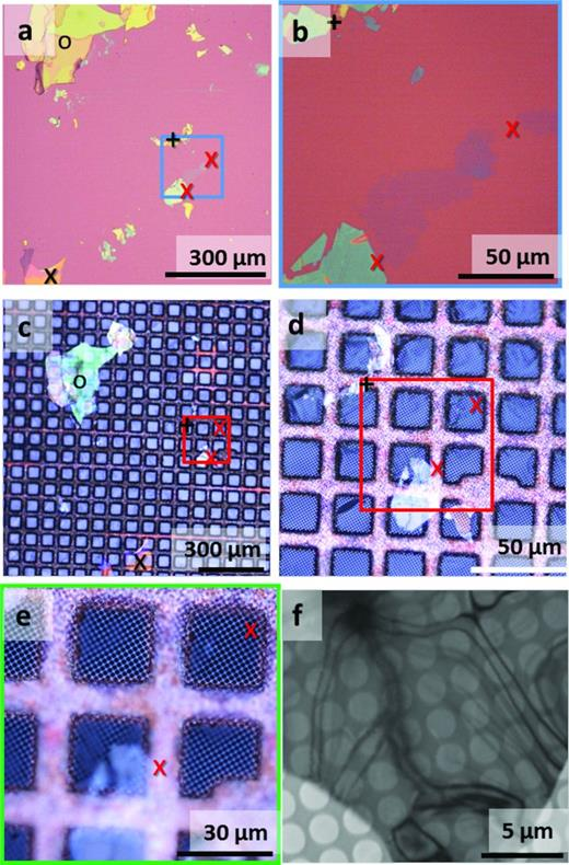 Illustrating the process of flake transfer from the silica substrate to the TEM support grid. Optical microscope images showing exfoliated biotite flakes on a silica substrate (a and b) and after transfer to the TEM support grid (c–e). The thinnest flakes are positioned between the red crosses and have the characteristic violet-blue colour. The black symbols (o, + and x) highlight positions on thicker flakes, demonstrating that relative positions are largely preserved before and after transfer. The blue square in (a) indicates the region-enlarged edge (b). The red square in (c) and (d) indicates the region-enlarged edge (e). (f) Low-magnification TEM image showing the regular array of round holes in the quantifoil TEM support grid and a thin biotite flake.