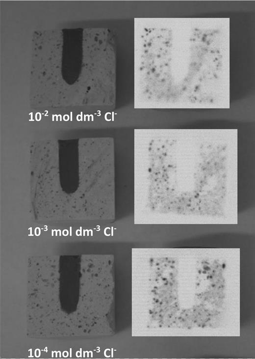 Photographs and autoradiographs of longitudinally sectioned NRVB cylinders from the experiments with CDP.