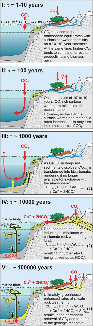 Illustration of the primary mechanisms of sequestration of CO2 from the atmosphere. Panel (I) represents air-sea gas exchange and 'CO2 fertilization' of the terrestrial biosphere, (II) shows ocean invasion and soil carbon inventory adjustment, (III) represents sea-floor CaCO3 neutralization, (IV) illustrates terrestrial CaCO3 neutralization, and (V) represents the silicate weathering carbon sink.