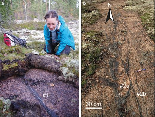 (a) The Högberget-1 vein, representing generation #1, photographed towards N by Jeremy Woodard (with Nadya Priyatkina as scale) on the site where sample KS 1402 was collected. (b) Cutting relations between quartz veins representing generations #2a and #2b at Högberget (photo modified after Valkama et al., 2016b).
