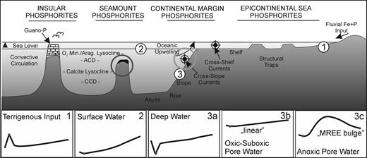 Schematic sketch depicting the different phosphorite depositional environments and assumed REE patterns (1–3c) (Glenn et al., 1994; Shields and Stille, 2001). Transgression resulted in drowning of the platform, reworking of microbial mats and phosphatic sediments. The dark circle shows the possible formation environment of the phosphorite studied from Pécsely, while the light-coloured circle shows that from Tata. The shape of the NASC-normalized REE patterns shows the 'MREE bulge' (3c), which also confirms the anoxic depositional environment.