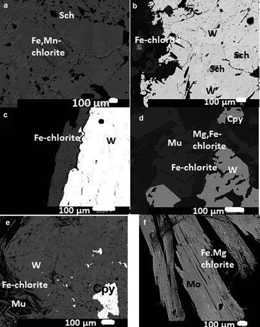 Back-scattered electron images: (a) Fe,Mn-chlorite + scheelite; (b) Fe-chlorite + wolframite and scheelite; (c) Fe-chlorite and wolframite; (d) Fe-chlorite, muscovite (Mu) and wolframite; Mg,Fe-chlorite and chalcopyrite (cpy); (e) Fe-chlorite, wolframite and chalcopyrite; (f) Fe,Mg-chlorite along the cleavage planes of molybdenite (Mo).