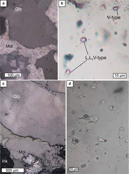 Two types of fluid inclusions measured at the Kalinovskoe (a,b) and Birgilda (c,d) sites. (a) quartz overgrown by molybdenite, reflected light, sample К-2010/73.4; (b) enlarged fragment of (a) in transmitted light, inclusions of VL1L2- and V-types; (c) quartz intergrown with a molybdenite rosette, reflected light, sample Bir-4905/294.5; (d) enlarged fragment of (c) in transmitted light, inclusions of VL type.