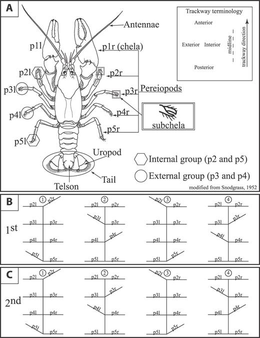 Terrestrial And Aquatic Neoichnological Laboratory Experiments With
