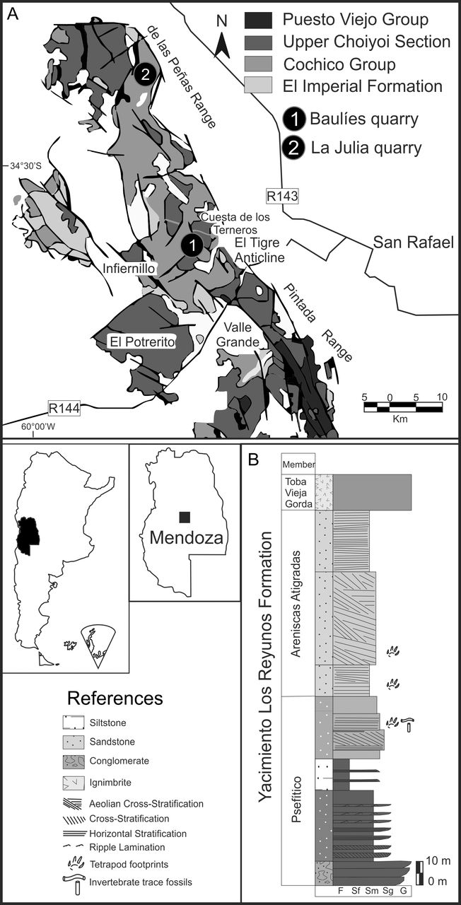 Tetrapod Tracks Taphonomy In Eolian Facies From The Permian Of