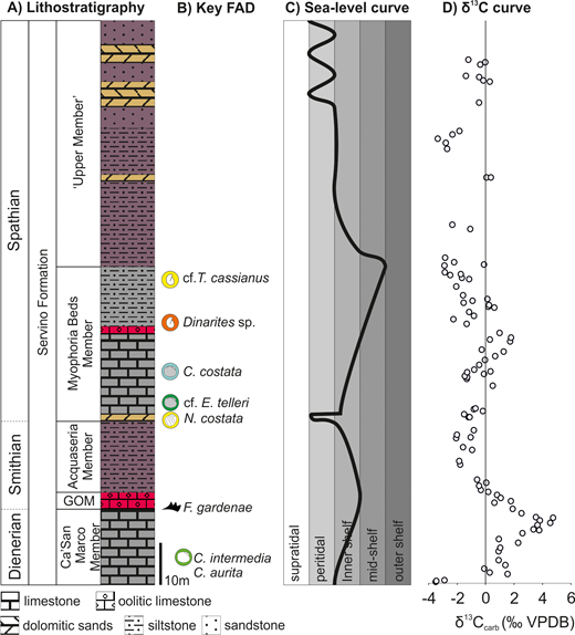 Summary stratigraphy of the Lower Triassic Servino Formation, Italy. Lithostratigraphy following Sciunnach et al. (1999), vertical subdivision is thickness proportional after Path 424 section. Abbreviations: GOM = Gastropod Oolite Member; FAD = First Appearance Datum. Occurrences of Claraia intermedia after Posenato et al. (1996) and occurrences of C. aurita and Dinarites sp. after Cassinis et al. (2007). All other FADs from this study. Sea-level curve from this study. Carbon isotope curve are from Path 424 section (this study).