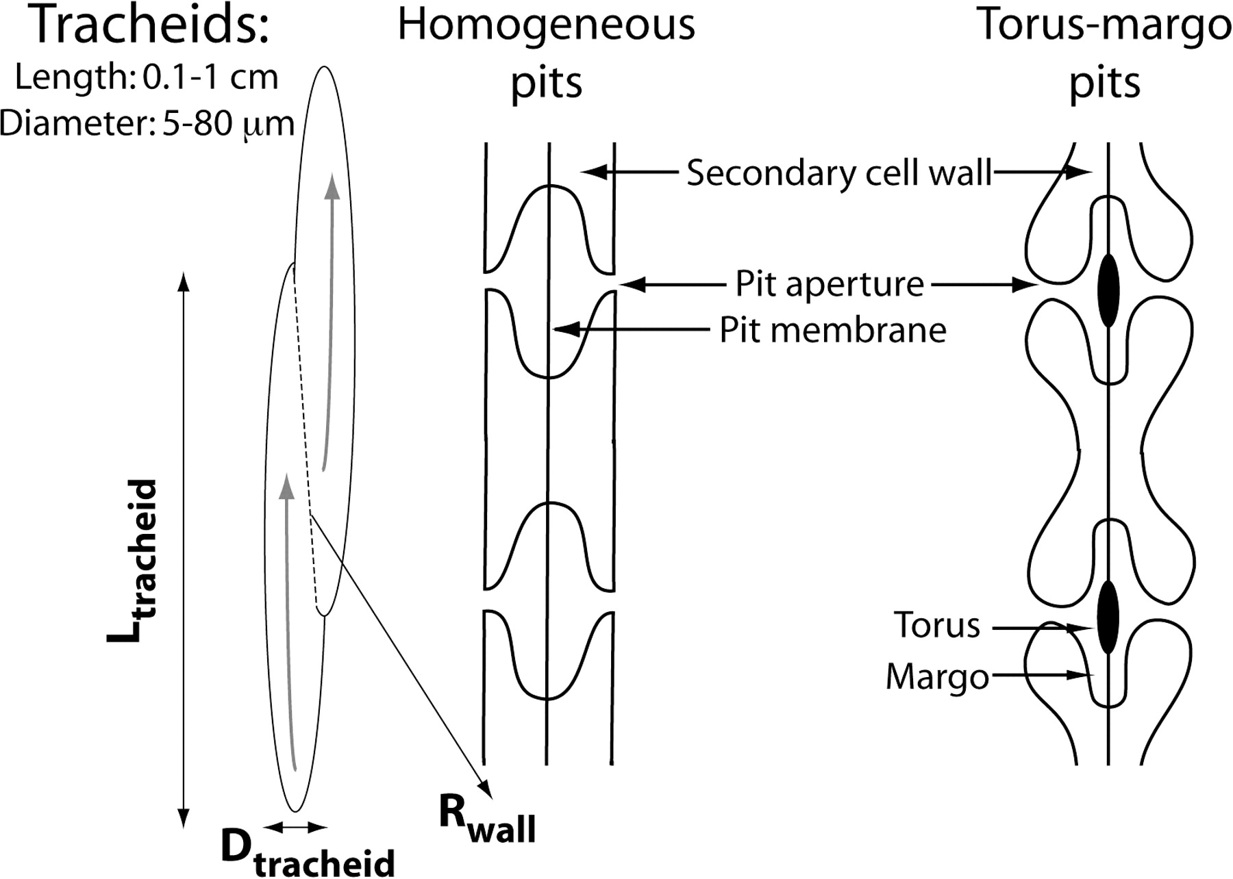 Physiologically Explicit Morphospace For Tracheid Based Water Electrical Earth Pit Diagram View Largedownload Slide